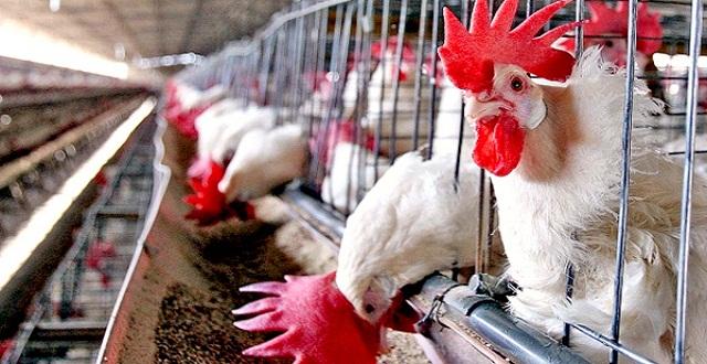 gripe aviar aguascalientes web