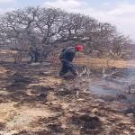 REPORTA LA CONAFOR AGUASCALIENTES 42 INCENDIOS FORESTALES AL MOMENTO