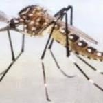 La limpieza de patios y azoteas previene el desarrollo del mosco portador de Dengue