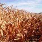 Más productores tendrán que contar con seguro catastrófico
