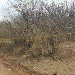 LA OSAMENTA ENCONTRADA CORRESPONDE AL HOMICIDIO  DE JUAN GABRIEL ESPARZA