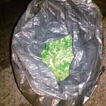 Aseguran en Calvillo, más de 3 kilogramos de marihuana