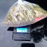 Capturan en el municipio de Calvillo a sujeto en posesión de marihuana