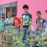 Se reforestaron las inmediaciones de las Casas de Ciencias en Fraccionamiento Popular, Centro de Barrios y Ojocaliente