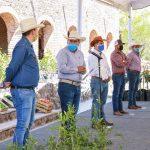 Con apoyo del gobierno estatal y municipal avanza la reconversión productiva del campo calvillense